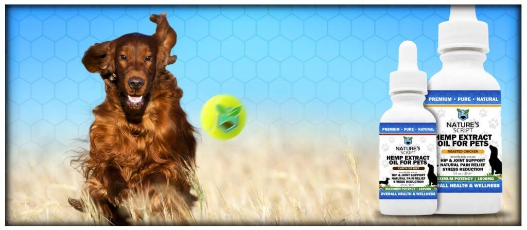 CBD Oil Benefits for pets