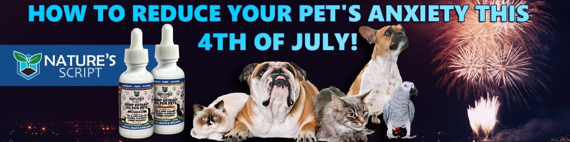 How to Reduce Your Pet's Anxiety - Fourth of July