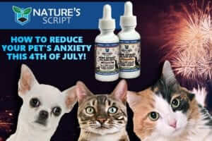 How to Reduce Your Pet's Anxiety on Fourth of July