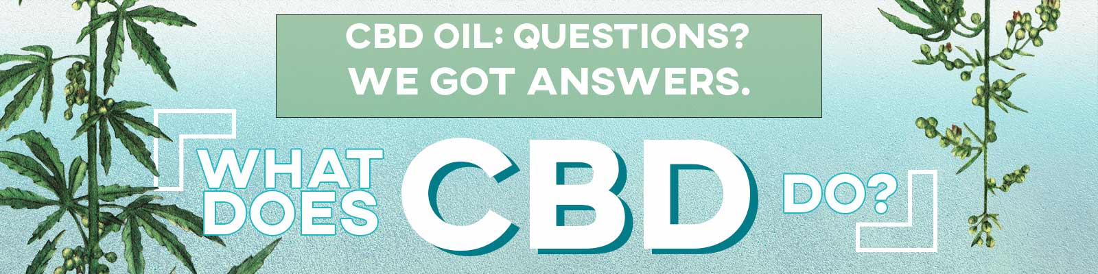What Does CBD Do Banner